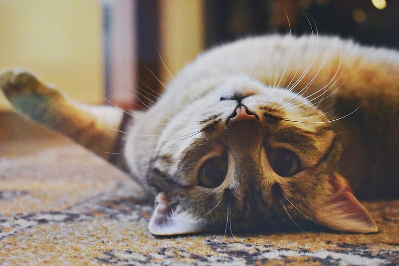 Déménager avec son animal de compagnie: nos conseils
